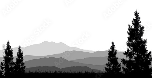 Fotografija  coniferous forests for you design