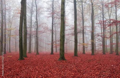 liscie-w-runie-lesnym-jesien-zima-czerwone-liscie