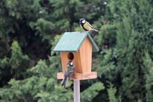 Birds Booths Feeding