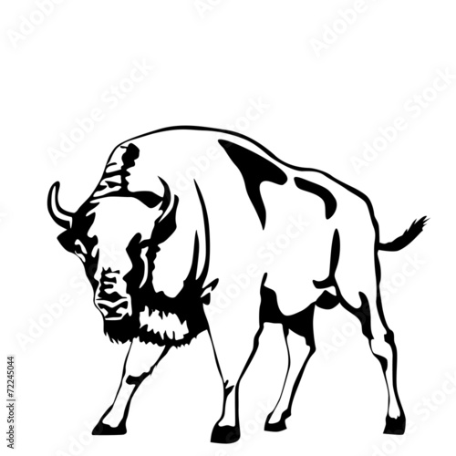 Valokuva  black and white aurochs illustration