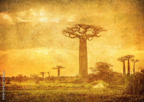 Photo Vintage image of Baobabs avenue, Madagascar