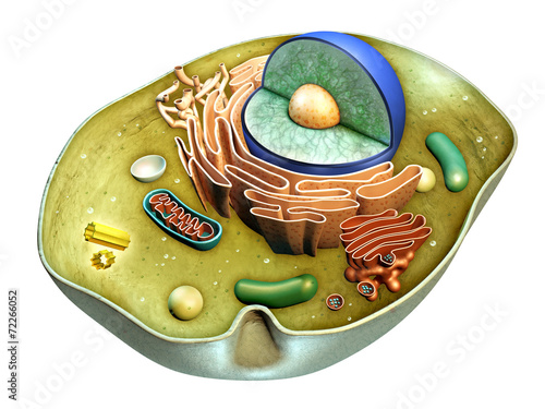 Cell structure Fototapet