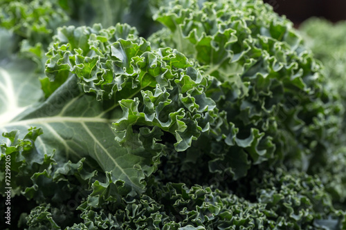 Obraz A healthy fresh curly kale - fototapety do salonu