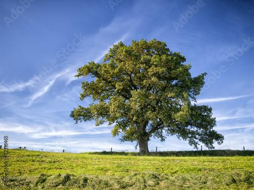 Fotografie, Tablou  tree and meadow