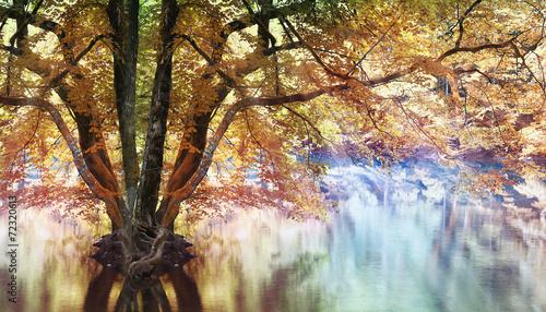 landscape magical forest lake
