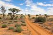 canvas print picture - Kalahari tracks
