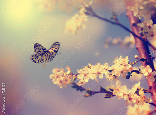 Tuinposter Lente Butterfly and cherry blossom