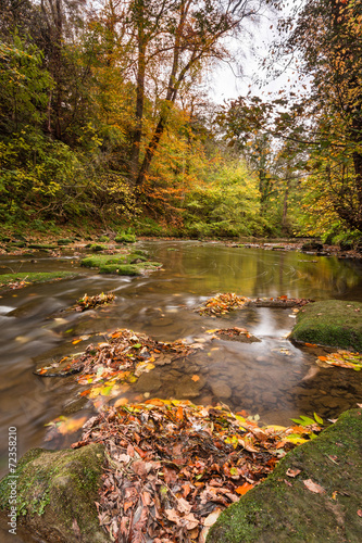 Fototapety, obrazy: River Blyth in autumn vertical