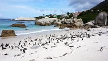 Penguins False Bay Boulders