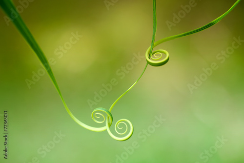 Papiers peints Spirale Abstract leaf spiral close-up