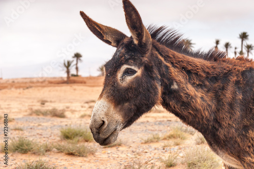 Foto op Canvas Ezel Brown donkey