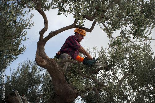 Fotografía  Pruner agricultural worker