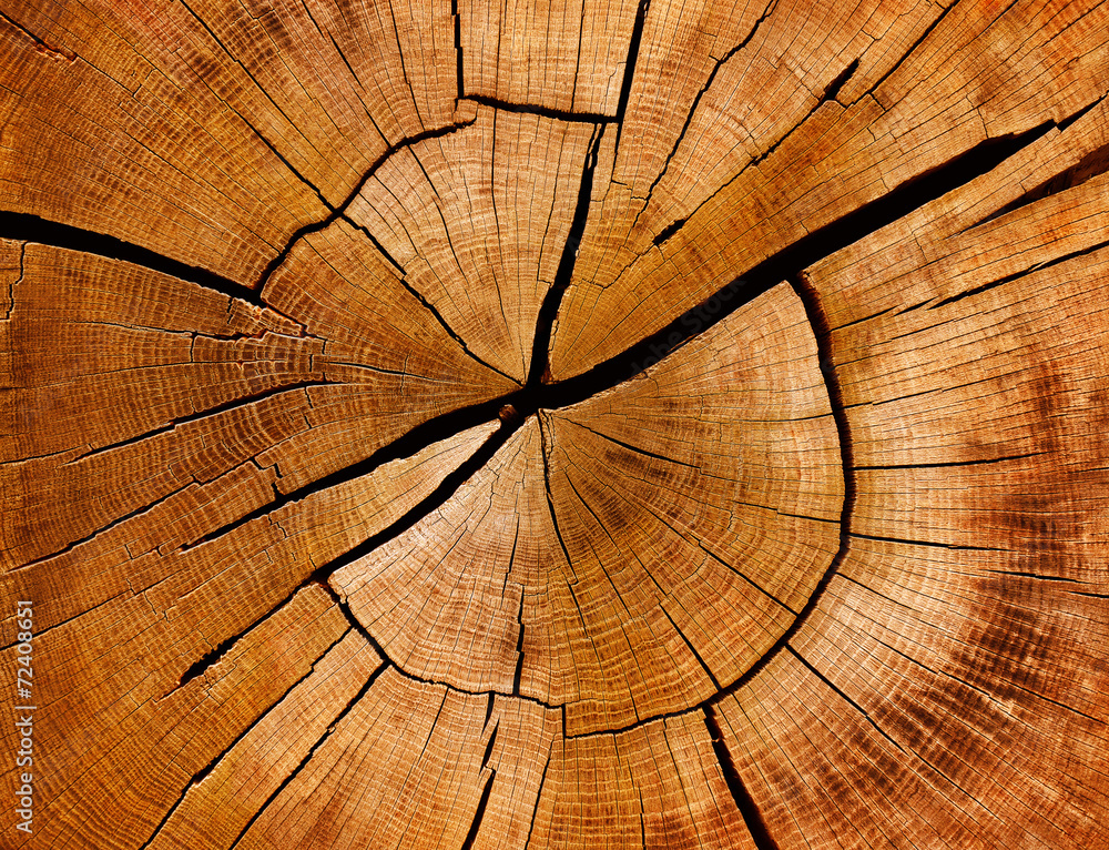 Fototapeta Jahresringe und Maserung eines Baumstamms