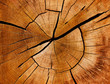 Leinwandbild Motiv Jahresringe und Maserung eines Baumstamms