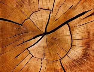 Naklejka Eko Jahresringe und Maserung eines Baumstamms