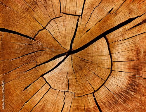 Fotografía  Jahresringe und Maserung eines Baumstamms