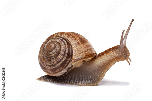 snail on the white background Canvas Print