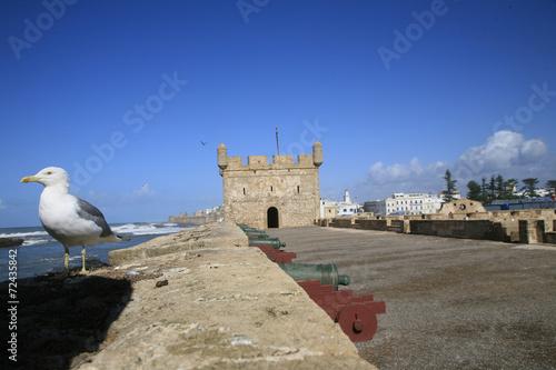 Foto op Canvas Marokko Gabbiano