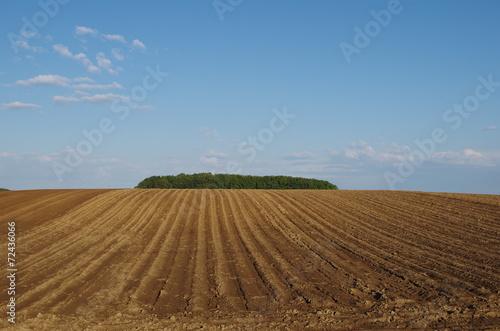 Fotografie, Obraz  傾斜のある畑
