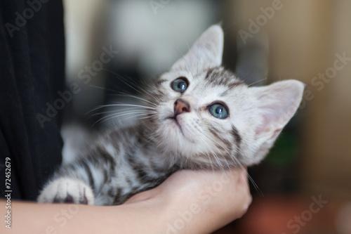 Foto op Aluminium Kat 猫 アメリカンショートヘア