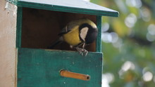 Birds Titmouse Feeding On A Small Wooden Birds House