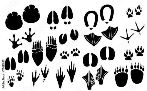 Vector animal footprint