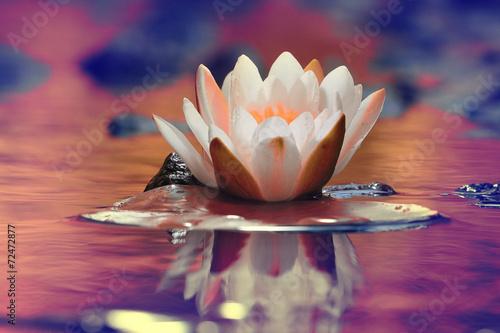 Poster de jardin Nénuphars lily white autumn pond