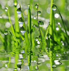 FototapetaFresh green grass with dew drops closeup.