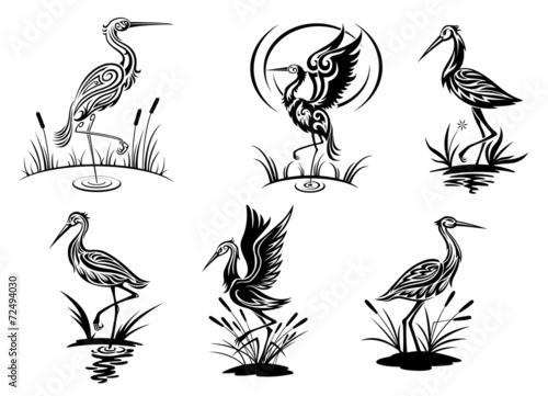 Stork, heron, crane and egret birds Fototapeta
