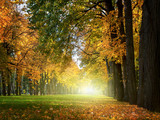 Fototapeta Perspektywa 3d - Beautiful  romantic alley in a park with colorful trees, autumn