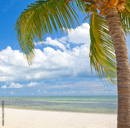 Valokuva  Palm trees on the beach ion Key West Florida