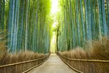 Fototapeta Uliczki - Kyoto, Japan Bamboo Forest