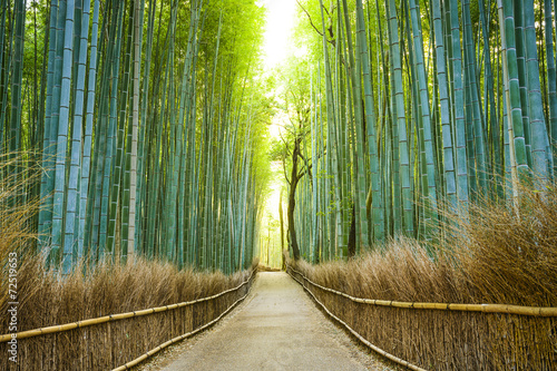 Photo sur Toile Bamboo Kyoto, Japan Bamboo Forest