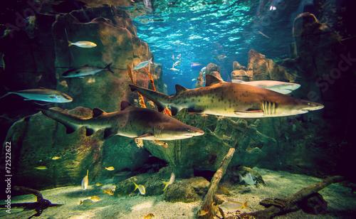 Carta da parati Two sharks in aquarium