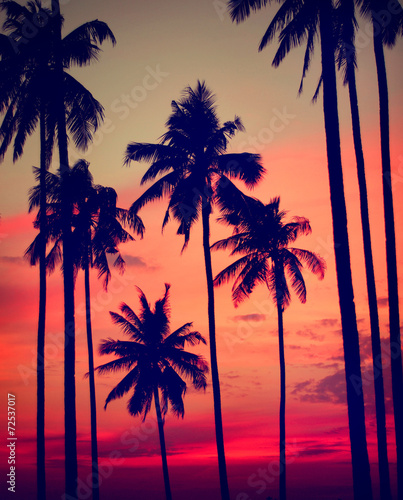 Papiers peints Palmier Silhouette Coconut Palm Tree Outdoors Concepts