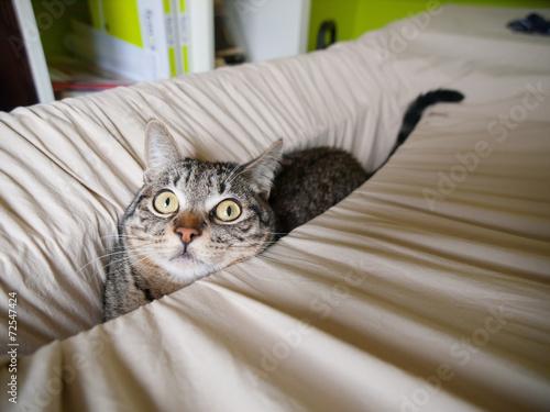 Keuken foto achterwand Kat Cat hidden in a linen