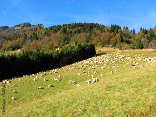 Spoed Foto op Canvas Khaki flock of sheep and goats grazing in the mountains