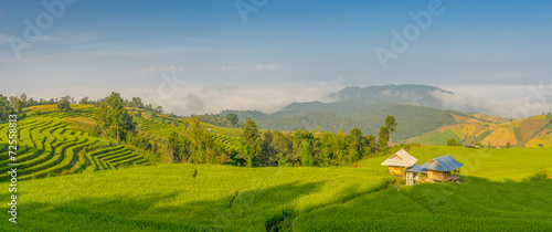 Panoramic view of rice terrace in the morning
