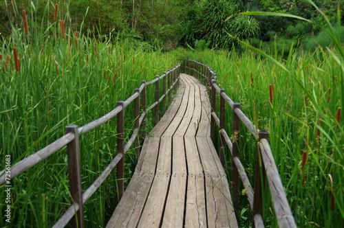 Marais - Chemin de bois