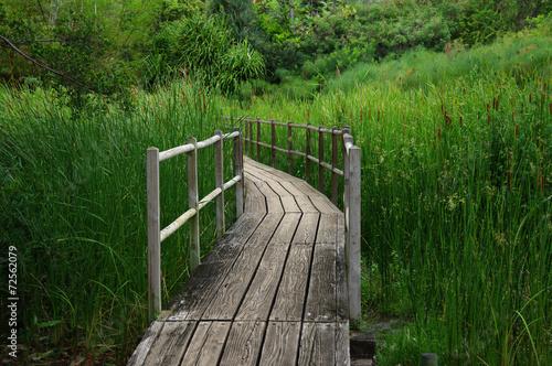 Tuinposter Weg in bos Chemin de bois