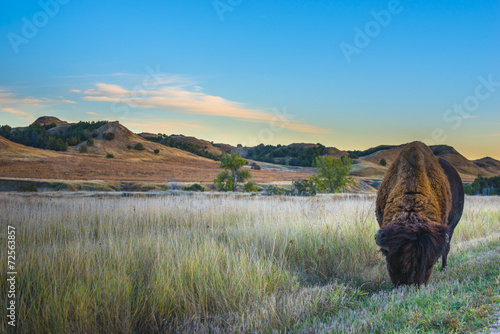 Photo sur Aluminium Buffalo Badlands Bison