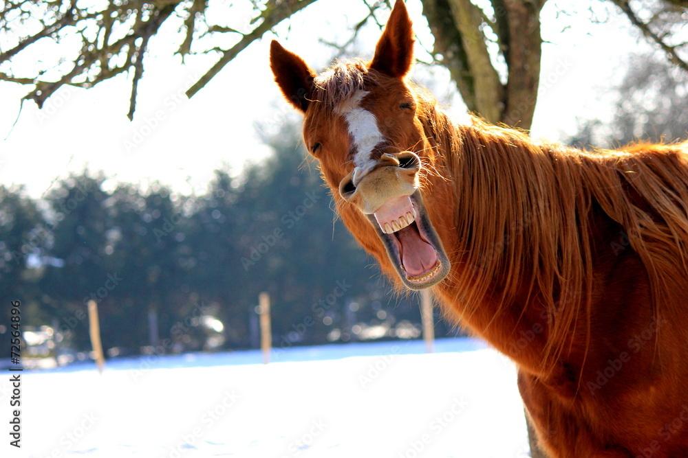 Fototapety, obrazy: Funny horse