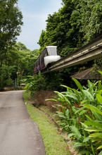 Monorail Train In Tropical For...