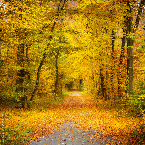 Foto op Canvas Weg in bos Autumn forest