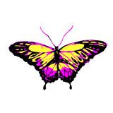 Fototapeta Motyle - butterfly175