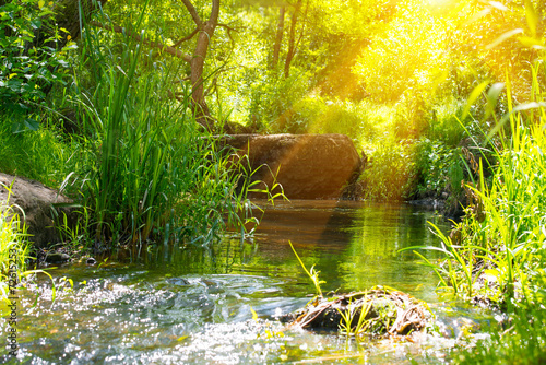 Foto-Rollo - Stream in the tropical forest (von Pavlo Vakhrushev)