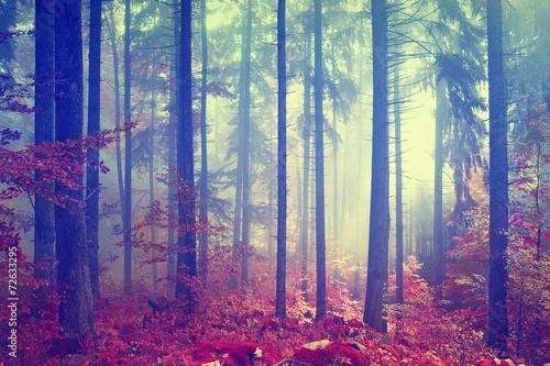 Poster Retro Magic color vintage forest