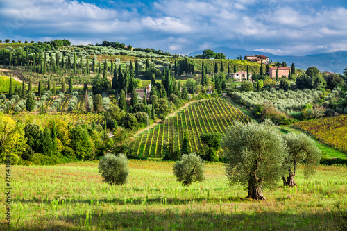 Canvas Prints Tuscany Olive trees and vineyards in a small village in Tuscany