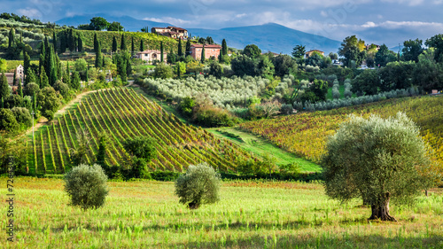 Fotobehang Toscane Vineyards and olive trees in a small village, Tuscany