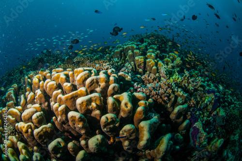 Poster Coral reefs Various reef fishes, Gili Lombok Nusa Tenggara Barat underwater